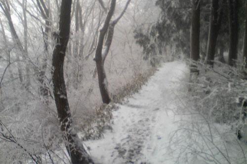 20100310_snow_02.jpg