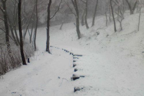 20100310_snow_04.jpg