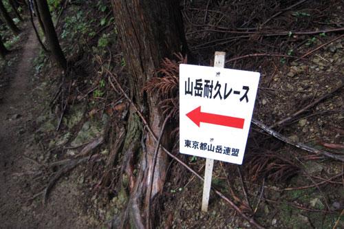 2010_hasetsune_05.jpg