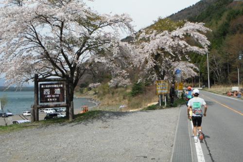 20110430_fujigoko_13.JPG