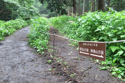 20120701_takao_06.JPG