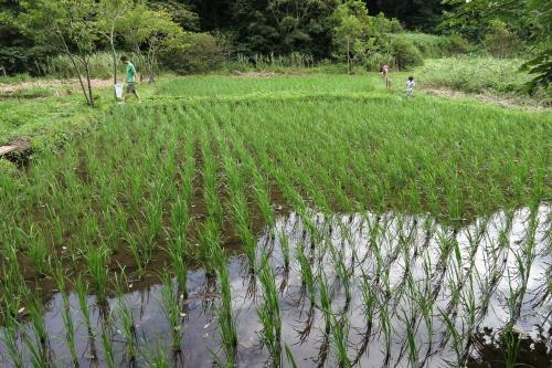 20120715_kamakura_09.JPG