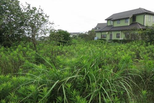 20120715_kamakura_12.JPG
